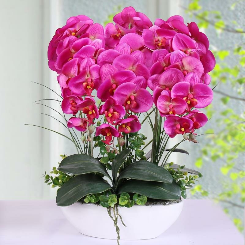 100Pcs Phalaenopsis Seeds Living Room Interior Decoration Flowers Potted Plant Seeds Home Garden