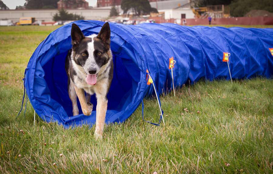 Pet Dog Agility Outdoor Exercise Obedience Training Tunnel