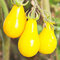 50Pcs/Pack Yellow Tomato Seeds Rare Tomato Plants Organic Vegetable & Fruit Potted Planting For Home Garden - #2