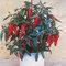 Egrow 100 قطعة / الحزمة الفلفل الفلفل الحار الفلفل الحلو بذور الخضروات بونساي للمنزل والحديقة