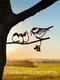 23-Types Metal Garden Tree Insert Decor Hummingbird Owl Simulation Animal Art Ornament - #05