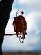 23-Types Metal Garden Tree Insert Decor Hummingbird Owl Simulation Animal Art Ornament - #09