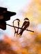 23-Types Metal Garden Tree Insert Decor Hummingbird Owl Simulation Animal Art Ornament - #18