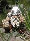 Pirate Victor Norwegian Gnome Dwarf Statue Resin Miniature Figurines Sculptures Outdoor Garden Decor Ornament - #02