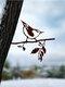 23-Types Metal Garden Tree Insert Decor Hummingbird Owl Simulation Animal Art Ornament - #13