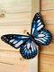 1 pieza de acrílico forjado mariposa hogar hardware para colgar en la pared artesanías Colgante decoración regalo hecho a mano para interior al aire libre decoración - azul