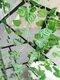 2mシミュレーション植物壁掛けプラスチック偽人工植物緑のつる籐ガーランドガーデンホームウォールホテル結婚披露宴の装飾 - #03