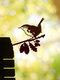 23-Types Metal Garden Tree Insert Decor Hummingbird Owl Simulation Animal Art Ornament - #15