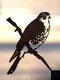 23-Types Metal Garden Tree Insert Decor Hummingbird Owl Simulation Animal Art Ornament - #14