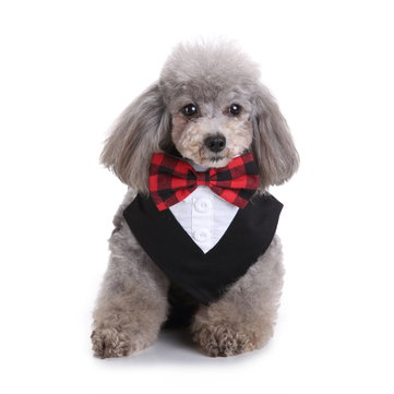 Formal Dog Tuxedo Bandana Ties Pet Bow Tie