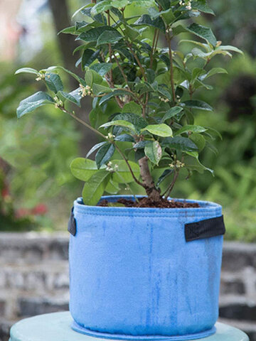 Flores Vegetais Crescer Bolsas