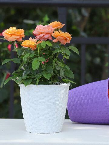 Rattan Resin Flower Pot Gardening Decoration Flower Pot