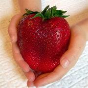 Riesige Erdbeere-Samen