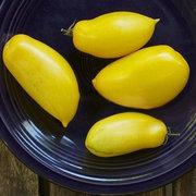 Egrow 100Pcs / Pack Манго Помидоры Семена Сад Горшечные фрукты Овощные посадки