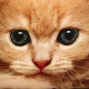 3D Cute Expressions Gatos tiro almohadillas Sofa Office Car Cojín Cubierta de regalo