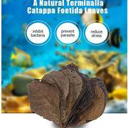 10шт Natural Terminalia Catappa Foetida Leaves Island Алмонд Лист Рыба Очистка Танк