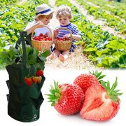 Multi Pockets Potato Strawberry Planter Balcony Strawberry Grow Borsa Ortaggi da giardino