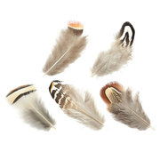 20pcs Assorted Beautiful Natural Pheasant Feathers Cloth Crafts Trimmings Decor