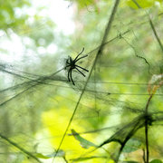 Halloween Cobweb Stretchy Spider Web For Haunted House Props Party Decoration With 2 Fake Spider